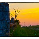 Life`s little Fences  by vince dwyer