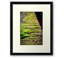 Stay On The Line Framed Print