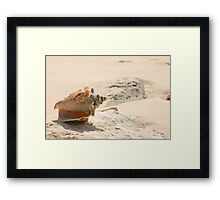 Sea Shells on the beach.  Framed Print