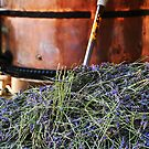 Lavender harvest by Heather Thorsen