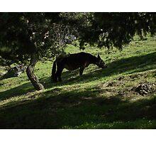 donkey Photographic Print