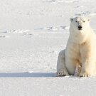 Sitting on the ice by Anthony Brewer