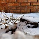 Stump In The Snow by Kristen O'Brian