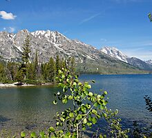 Grand Tetons Jenny Lake North View by Michael Kirsh