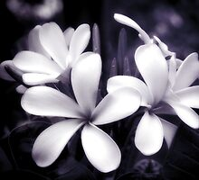 Tropical Plumeria by Karen Lewis