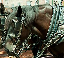 Carriage horses by Junec