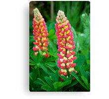 Lupins Canvas Print