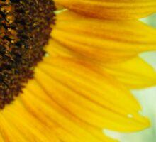 Sunflower 1 Sticker
