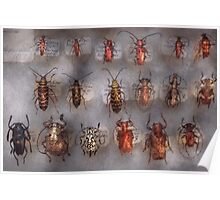Insect - Beetles - The usual suspects  Poster