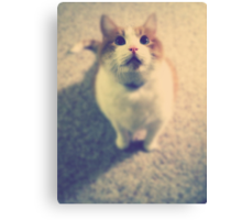 Pink Nose Canvas Print
