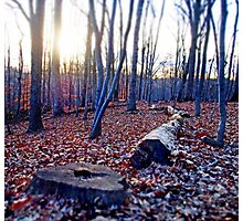 Surreal Woods  Photographic Print