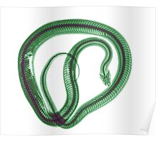 Snake under x-ray a whole mouse can be seen  Poster
