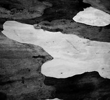 Black & White Abstract Bark # 3 by Frederick James Norman