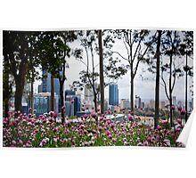 Spring in Kings Park  Poster