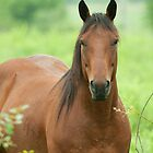 Horse in the field in spring by Junec