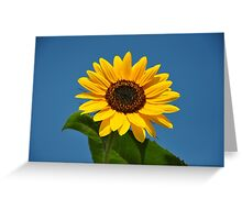 Sunflower 2 Greeting Card