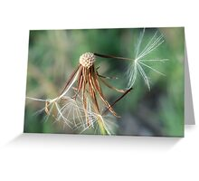 Another dandelion picture.. Greeting Card