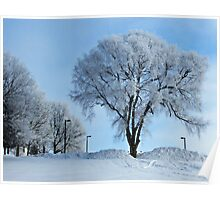 Winter Frosting Poster