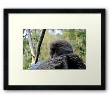 New World Porcupine Framed Print