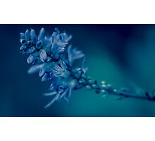 Flora - Shades of Blue Photographic Print