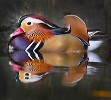 china birds - the mandarin duck by houenying