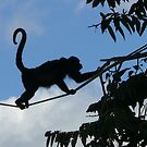 Howler Monkey Highway: Costa Rica by linfranca