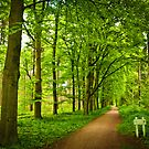 Green forest by pahas