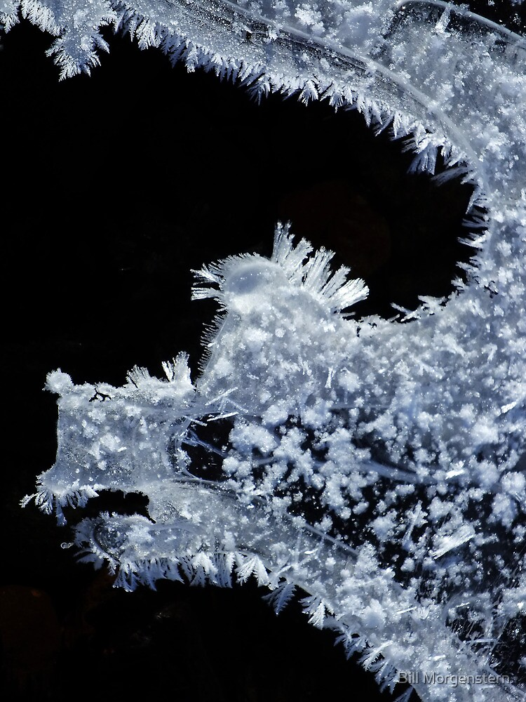 Winter Dragon by Bill Morgenstern