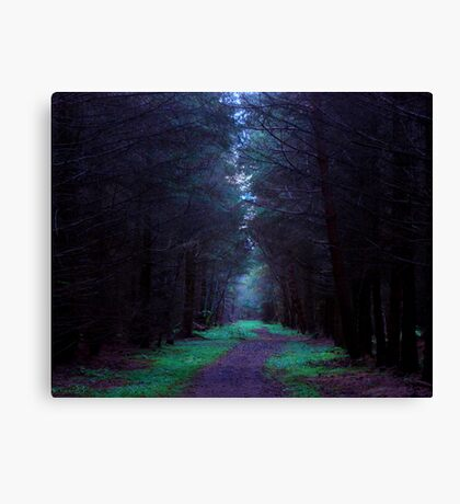 Northumberland Forest Canvas Print