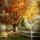 Autumn - Westfield, NJ - I love autumn by Mike  Savad