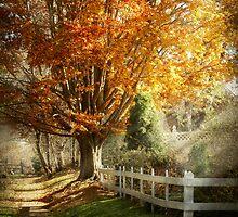 Autumn - Westfield, NJ - I love autumn by Mike  Savad