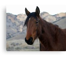 I'm so handsome,Reno Nevada USA Canvas Print