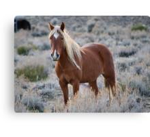 Blonde Beauty,Reno Nevada USA Canvas Print