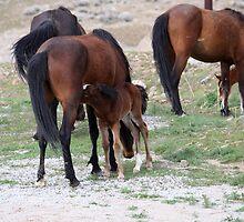 Feeding Time,Reno Nevada USA by Anthony & Nancy  Leake