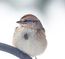 American Tree Sparrow ~ by Renee Blake