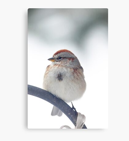 American Tree Sparrow ~ Canvas Print