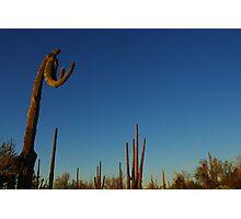 """Boxing saguaro"", Saguaro National Park, Arizona Photographic Print"