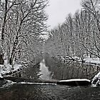 Saucon Creek by djphoto