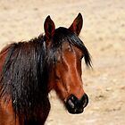 Black Mane,Reno Nevada USA by Anthony & Nancy  Leake