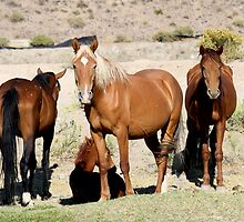 The Gangs All Here,Reno Nevada USA by Anthony & Nancy  Leake