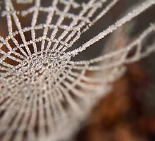 A Frosty Web by charlymarion