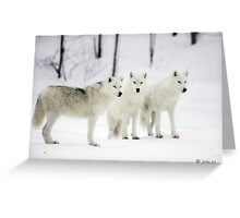 ..a different Wolf Pack... Greeting Card