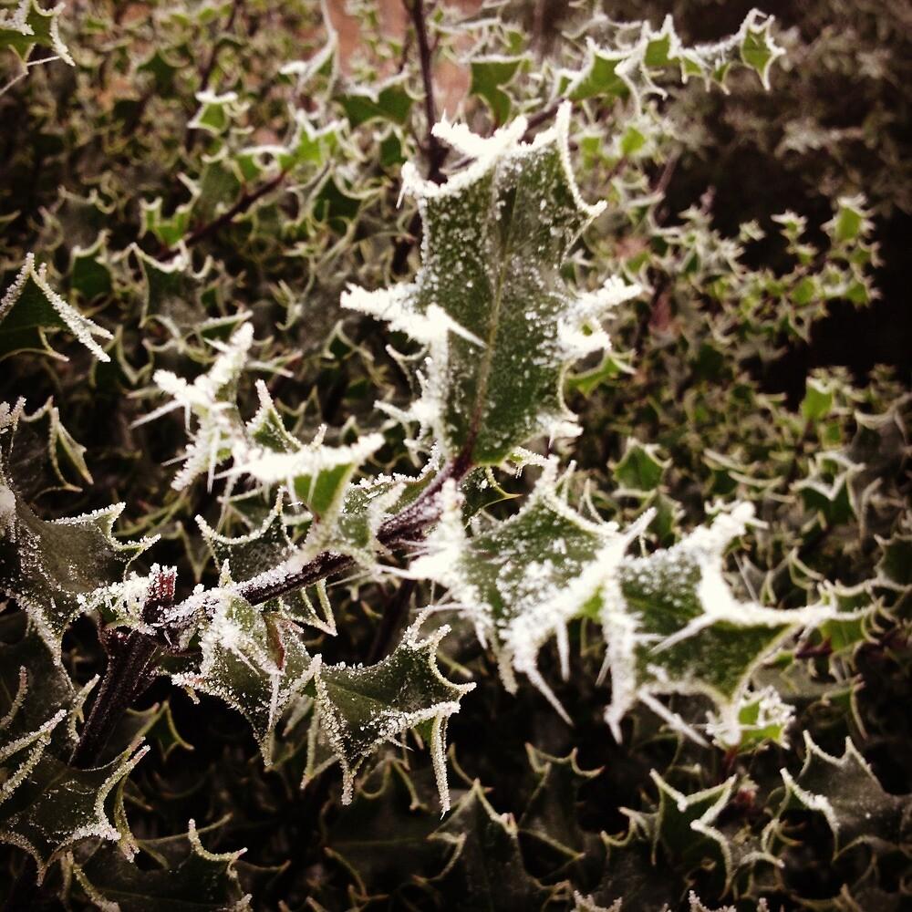 Frosty Holly by Robert Steadman