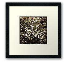 Frosty Holly Framed Print