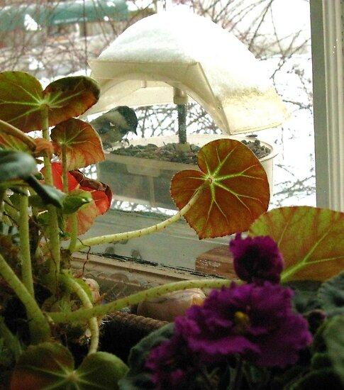 Flora & Fauna ~ Chickadee, Snow & Indoor Pursuits by artwhiz47