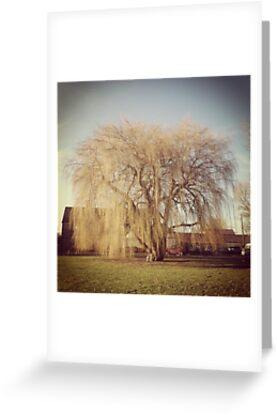 Willow tree by Robert Steadman