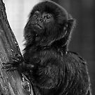 Goeldi monkey by starbucksgirl26