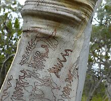 Scribbly Wrinkle: South Bruny Island, Tasmania by linfranca