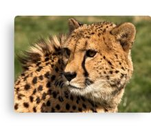 Look back ? in anger! Canvas Print