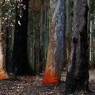 Burnt Trees - Murramarang National Park by Marilyn Harris